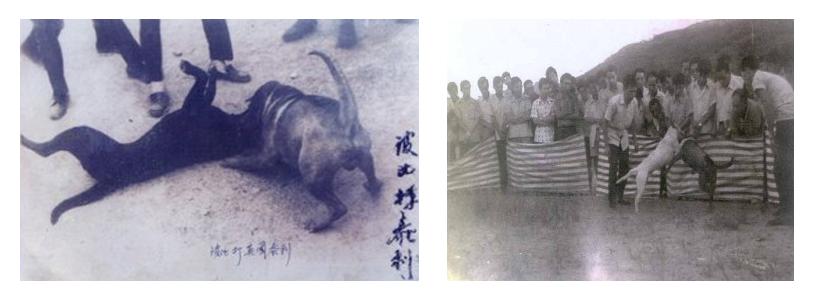 1960 Hong Kong - typicke psi zapasy