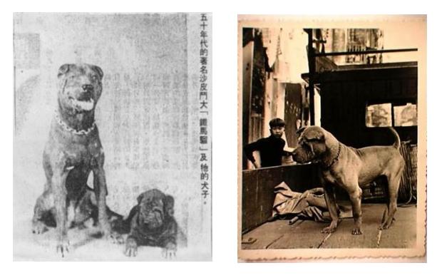 Iron Monkey - znamy bojovnik v Macau 1950