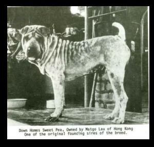 historic dog